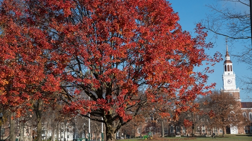 a tree with red leaves in front of Baker Tower